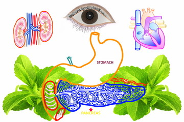 diabetes related  icon  pancreas  stomach with stevia