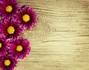 Burgundy Chrysanthemums Flowers on wooden background