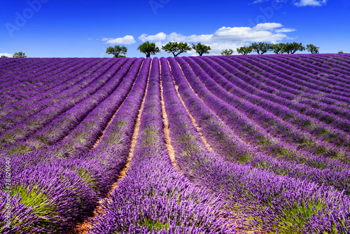 Foto op Aluminium Cultuur LAVENDER IN SOUTH OF FRANCE