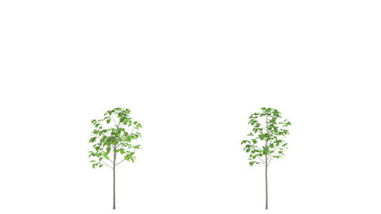 Growing garden trees. HD animation. In isolation.