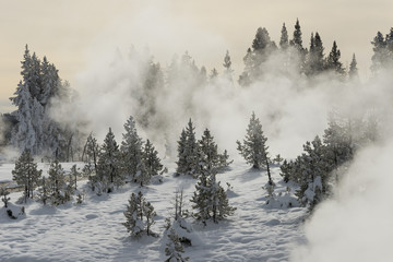Forest with steaming geysers