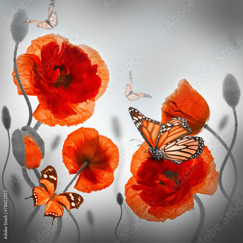 Tuinposter Poppy Red poppies field and blue cornflowers, butterfly
