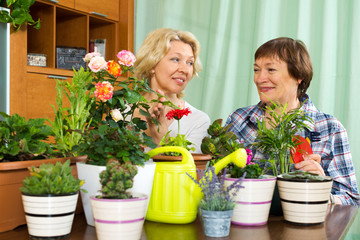 Two mature women taking care of decorative plants