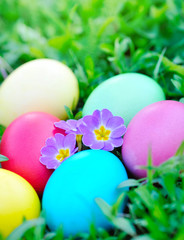 Colored easter eggs with primrose on green grass