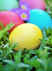 Colored easter eggs on green grass