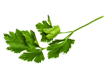 Green tops of parsley on white background
