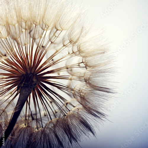 Aluminium Bloemen big dandelion on a blue background