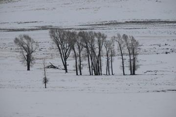Trees in a snowy plain
