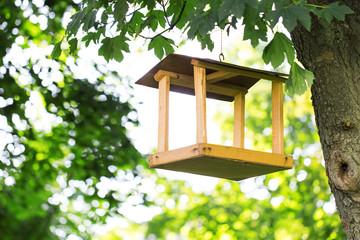 bird feeder trees