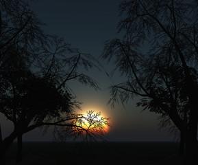 3D landscape of trees against a sunset sky
