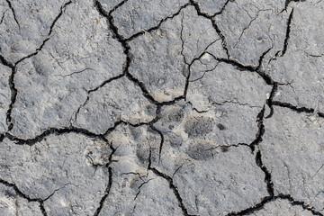 dry soil cracks paw dog