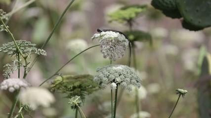Lucertola e fiori selvatici