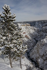 Yellowstone Canyon in winter