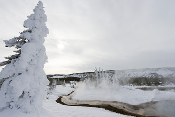 Geyser basin in winter