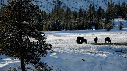 Binson in snowy landscape