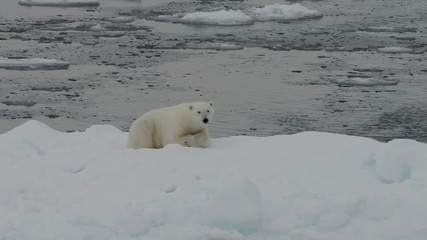 Polar bear lying on iceberg