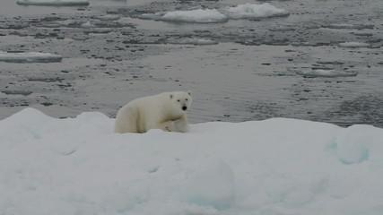 Polar bear lying on iceberg