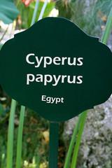 Table Cyperus papyrus, Ischia, Italy