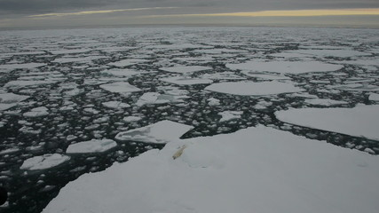 Polar bear lying down on an ice floe