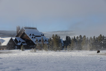 House and bison in winter