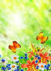 Summer landscape. flowers and butterflies