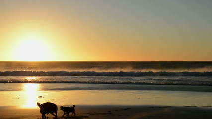 Surfer and dogs