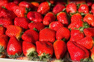 Fresh Red Ripe Strawberry