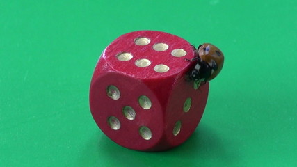 success concept. ladybug ladybird on red game dice