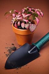 Garden trowel and flower in flower pot