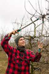 Pruning fruits