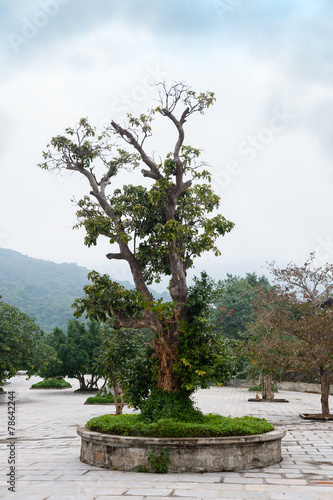 Plexiglas Bonsai Bonsai tree in Temple Linh Ung Pagoda Vietnam Danang