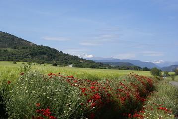 Vista de montaña, Pirineos, cielo azul, nubes y día soleado, Som
