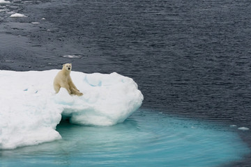 Polar bear on iceberg