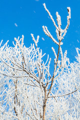 Frosted tree and falling snow