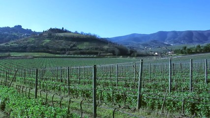 View of Vineyard in Tuscany, from Carmignano