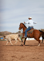 Cow Roping