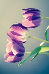 tulips retro effect