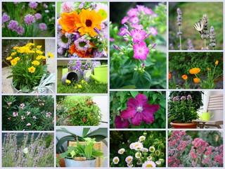 montage de floraison de printemps,été