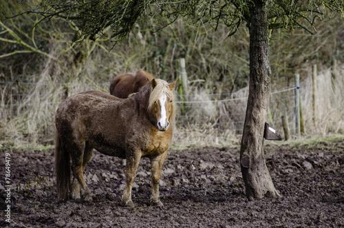 Keuken foto achterwand Paarden Vernachlässigte Pferde 6