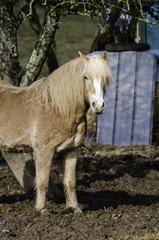 Vernachlässigte Pferde 2