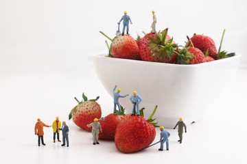 worker working with strawberry white background