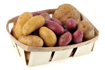 Cagette de différentes sortes de pommes de terre