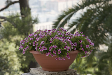 purple flowers on city balcony view