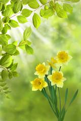 Frühling 330