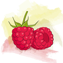 Vector raspberry on watercolor background