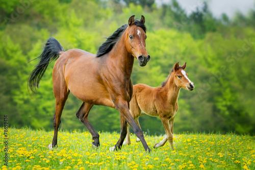 Foto op Plexiglas Paarden Stute und Fohlen