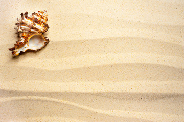 Shell on a wavy sand