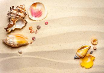 Shells on a wavy sand