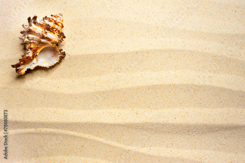 canvas print picture Shell on a wavy sand