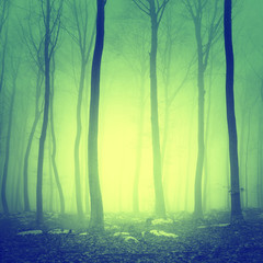 Mystic yellow green forest scene